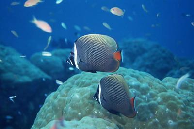 鱼是在水中生活的动物,对于鱼类的拍摄,当然是在水下拍摄的效果最好